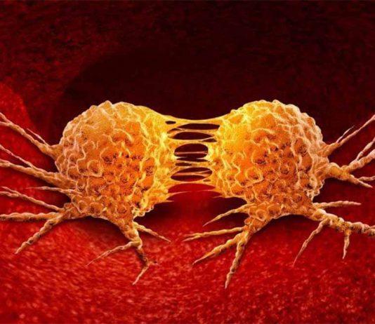 Nhân đôi tế bào ung thư